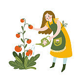 Girl watering tomato with watering can. Young Woman Working in Garden or Farm. Vector Illustration isolated on the white background.