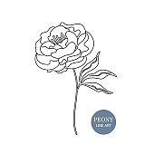 Blossoming peony flower in vector