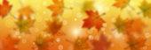 Autumn style vector banner template