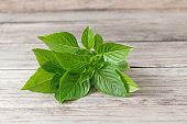 Green fresh basil on wood background