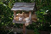 cat on a bird table