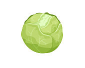 Green cabbage isolated on white background. Organic ingredient for salad. Fresh and healthy food. Vegetarian nutrition. Immunity and digestion