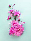 Pink flowers on turquoise, blue background. Beautiful close up. Summer, springtime blooming composition