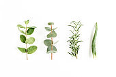 Mix of herbs, green branches, leaves mint, eucalyptus, rosemary and plants collection on white background. Set of medicinal herbs. Flat lay. Top view