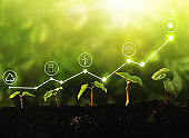 Young  plants growing at sunlight with increase graph and icons energy sources for renewable. Sustainable development. Environment and ecology concept.