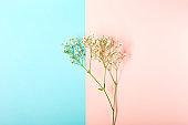 Creative banner with fresh white baby's breath flower