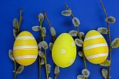 Easter holiday.Yellow striped easter egg and pussy willow sprigs on blue background.Spring festive easter background.Spring religious holiday