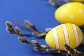 Easter holiday.Yellow easter eggs and pussy willow sprigs on bright blue background.Spring festive easter background.Spring religious holiday