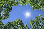 Blue sky, fresh green and glitter
