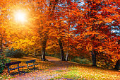 Golden autumn scene in a park, with falling leaves, the sun shining through the trees and blue sky. Colorful foliage in the park, falling leaves natural background