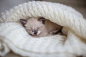 Kitten sleep on knitted plaid