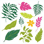Set of tropical leaves. Vector Collection on white background