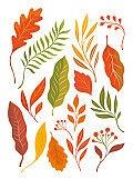 Autumn leaves, illustration on white background. Oak leaves, maple leaf  falling. Vector pattern, fabric design