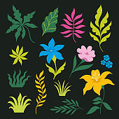 Set of tropical leaves and flowers. Vector Collection on black background