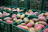 Mango in crates in fruit packaging warehouse