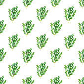 Fresh green rosemary leaves, twigs and branches seamless pattern on white background