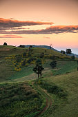 Scenery of tree on green hill with colorful sky in the evening