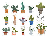 Pot plant set different potted plants in ceramic and glass pots. Home potted plants. Vector flat illustration