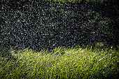 blades of green grass in pouring rain