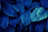 Full Frame of Blue Leaves Texture Background