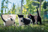animal cat friends playing together outdoors in the park