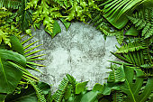 Creative nature layout made of tropical leaves. Summer concept