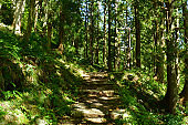 Stone steps shining through the trees in the forest