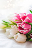 Pink and white Tulips isolated on white cloth background with copy space. Minimal floral mock up concept. Valentine's Day, Easter, Birthday, Happy Women's Day postcard