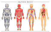 Human body structure set
