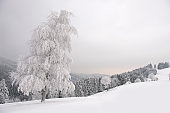 Winter idyll in the Black Forest