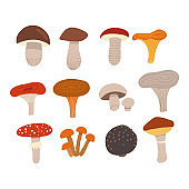 Edible mushrooms set with poisonous fly agaric. Different types of mushrooms, such as Champignons, chanterelles, porcini mushrooms, slippery jack, russula, truffle, boletus in trendy flat style.