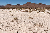 Dry and cracked ground with dry vegetation in the desert
