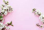 Spring border background with beautiful white flowering branches.
