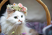 Funny cat smilling