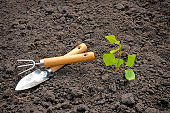 Garden tools and a sprout of fruit tree on a background of the earth. Seasonal garden work.