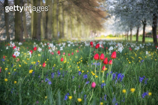 Spring Summer flower meadow landscape in dappled sunlight with s