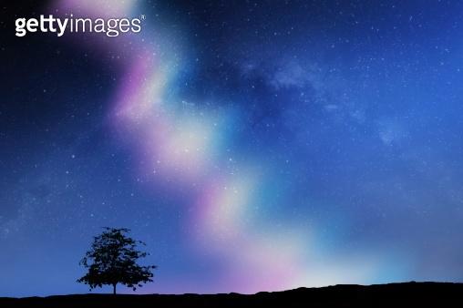 Aurora borealis landscape, Northern Lights with alone tree