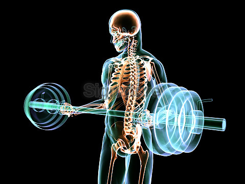 X-Ray Barbell Curl
