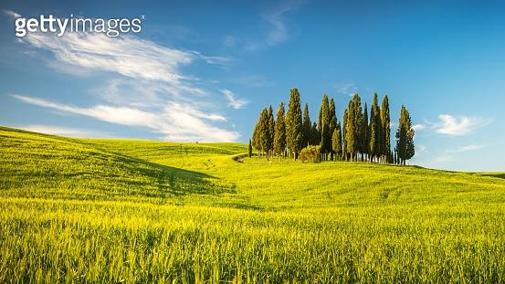 Tuscany at spring