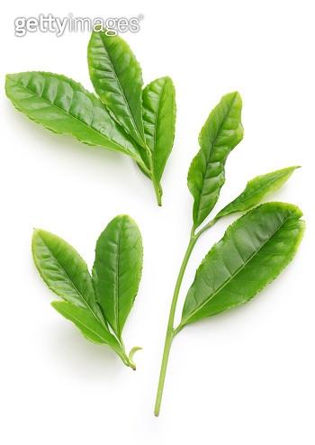 Japanese green tea first flush leaves