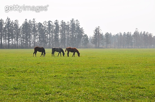 Horses ranch in spring