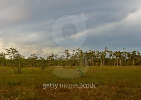 Florida Everglades at Dusk