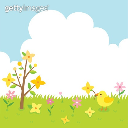 Forsythia flowers and cute chick