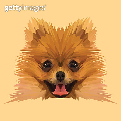 Boo Pomerian dog low poly.