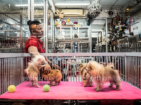 Pet shop at Chatuchak market Bangkok Thailand