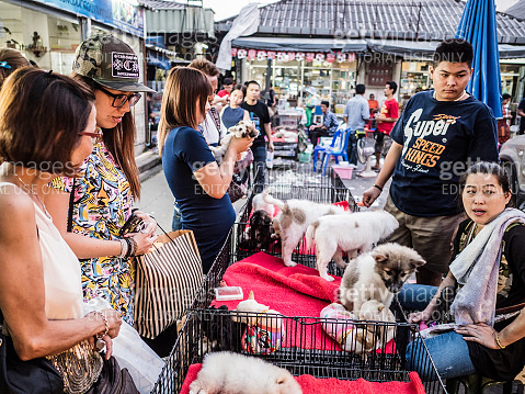 Puppies for sale at Chatuchak market Bangkok Thailand