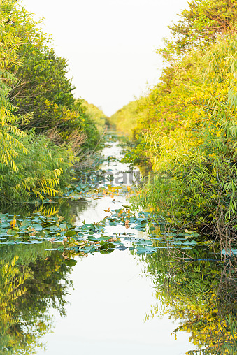 Everglades National Park Canal Reflecting Green Plants in Shark Valley