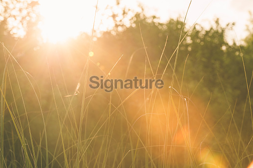 Sunset Lens Flare Over Shark Valley Everglades National Park Sawgrass