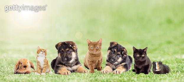 set pets on green grass, outdoors