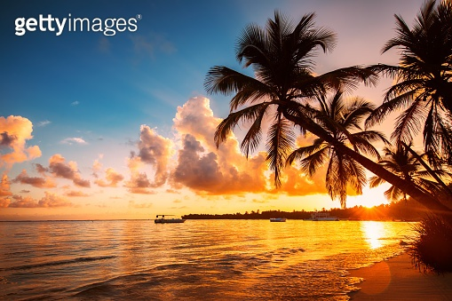 Palmtree silhouettes on the tropical beach, Dominican Republic